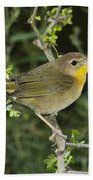 Common Yellowthroat Hen Bath Towel
