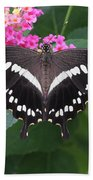 Constantines Swallowtail Hand Towel