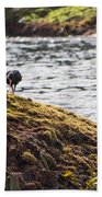 Cormorant - Montague Island - Australia Bath Towel