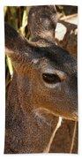 Coues White-tailed Deer - Sonora Desert Museum - Arizona Bath Towel