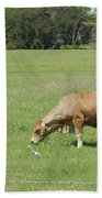 Cow Grazing With Egret Bath Towel