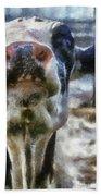Cow Kiss Me Photo Art Bath Towel