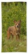 Coyote Happy Bath Towel