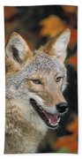 Coyote In Maple Bath Towel