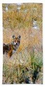 Coyotes Bath Towel