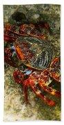 Crab In Cozumel Bath Towel