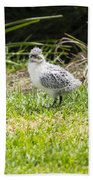 Crested Tern Chick - Montague Island - Australia Bath Towel