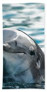 Curious Dolphin Hand Towel by Mariola Bitner