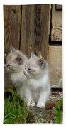 Curious Kittens Bath Towel