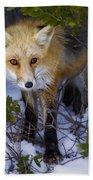 Curious Red Fox Bath Towel