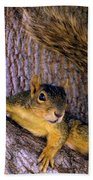 Cute Fuzzy Squirrel In Tree Near Garden Bath Towel