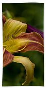 Daylily Picture 452 Bath Towel