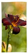 Daylily Pictures 576 Bath Towel