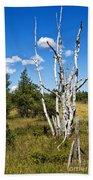 Dead Birch Trees Bath Towel