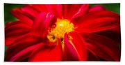 Deep Red Dahlia With Yellow Center Hand Towel