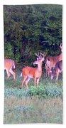 Deer-img-0160-005 Bath Towel