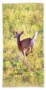Deer-img-0456-001 Bath Towel