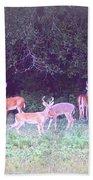 Deer-img-0470-002 Bath Towel