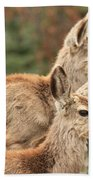 Deer In The Rocky Mountains Bath Towel