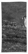 Denali's Majestic Wildlife Bath Towel
