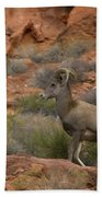 Desert Bighorn Sheep Bath Towel