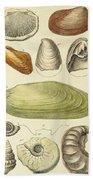 Devonian Fossils, Illustration Bath Towel