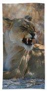 Disgruntled Lioness Bath Towel