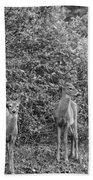Doe A Deer Bw Bath Towel