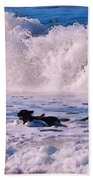 Dogs At Carmel California Beach Bath Towel
