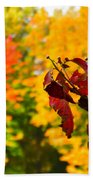 Dogwood And Fall Colors Bath Towel