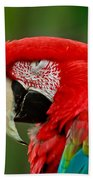 Dont You Dare To Stare Macaw Bath Towel