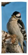 Downy Woodpecker Pictures 23 Bath Towel