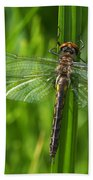 Dragonfly On Grass Bath Towel