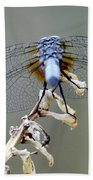 Dragonfly Wing Details II Bath Towel