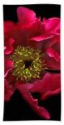 Dramatic Red Peony Flower Bath Towel