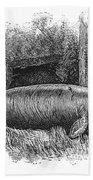 Dugong, Sea-cow Bath Towel