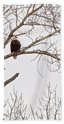 Eagle In Tree Bath Towel