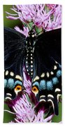 Eastern Black Swallowtail Butterfly Bath Towel