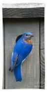 Eastern Bluebird At Nest Bath Towel