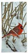 Eastern Cardinal - Cardinalis Cardinalis Bath Towel