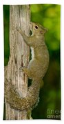 Eastern Gray Squirrel Bath Towel