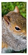 Eastern Grey Squirrel Bath Towel
