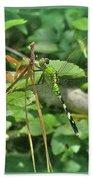 Eastern Pondhawk Female Dragonfly - Erythemis Simplicicollis - On Pine Needles Bath Towel