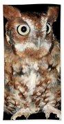 Eastern Screech Owl Bath Towel