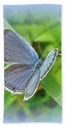 Eastern-tailed Blue Butterfly - Cupido Comyntas Bath Towel