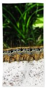 Eastern Tent Caterpillar Bath Towel