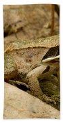Eastern Wood Frog Bath Towel