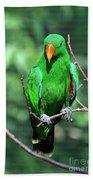 Eclectus Parrot-1 Bath Towel