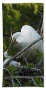 Louisiana Egret With Babies In Swamp Bath Towel