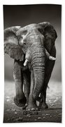 Elephant Approach From The Front Bath Towel